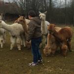 Ekskursijos i alpaku uki